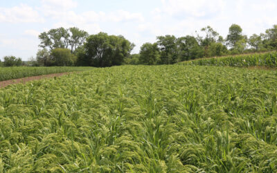 Dryland Genetics Raises $3.8M in latest fundraising round.